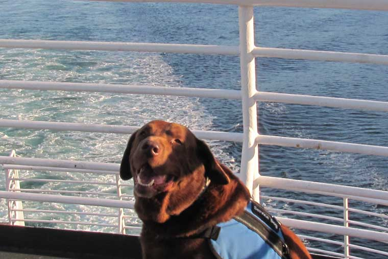 Certified service animals are allowed on passenger decks and not restricted by our pet policy © Alaska Marine Highway System