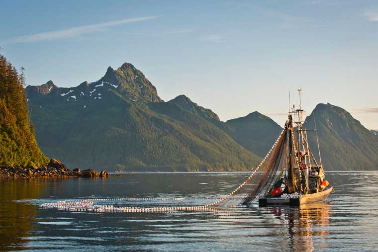 A Seiner brings in fish commercially near Cordova © Joshua Roper Photography